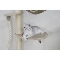 Praskalnik - Mačje drevo Dolomit MIKKA